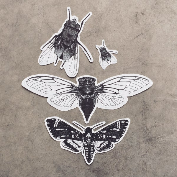 Image of Insect Sticker Pack