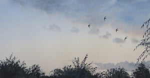 Image of 4 Swifts low over the garden at dusk