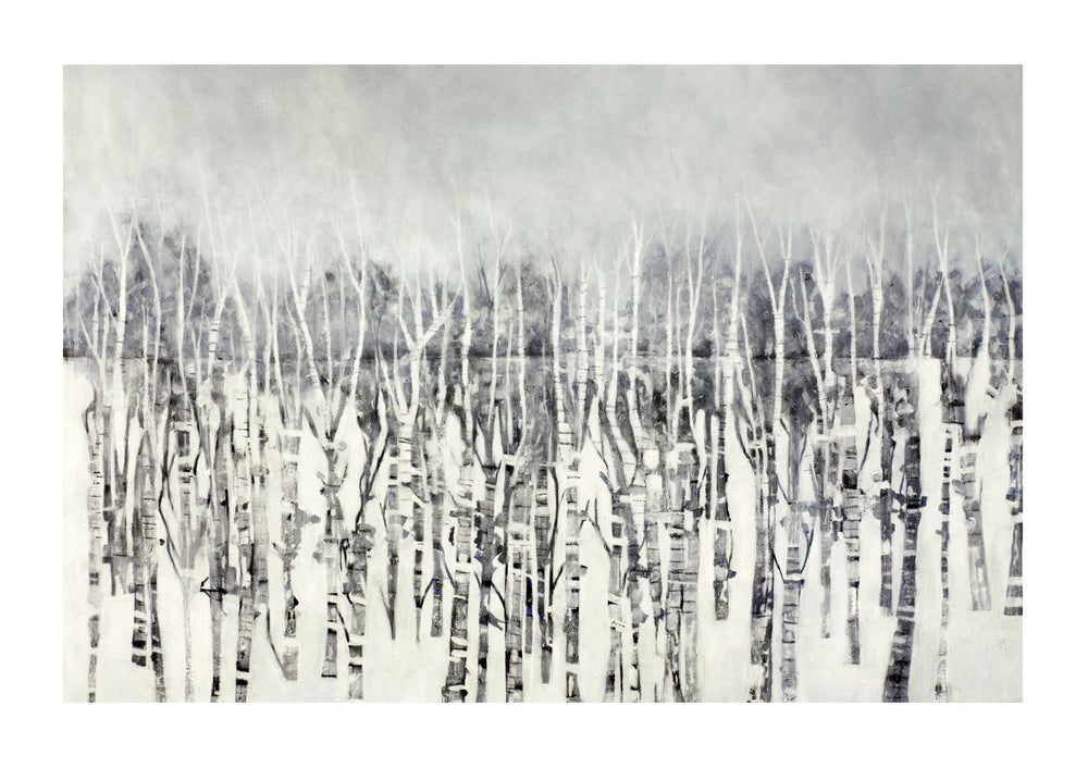Image of Silver Birch_1