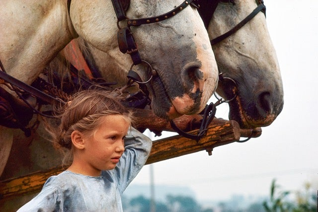 Image of Amish Girl and Draft Horses