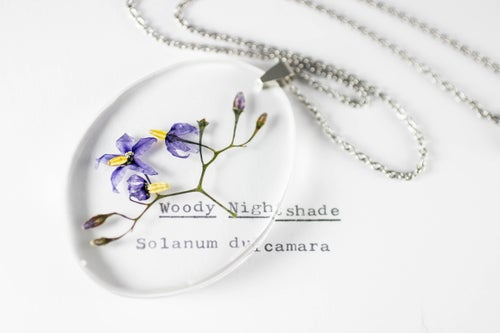 Image of Woody Nightshade (Solanum dulcamara) - Medium Oval #2