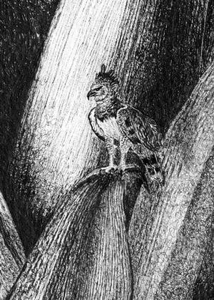 Image of NEW - Rainforest Rewild Super Size Prints!
