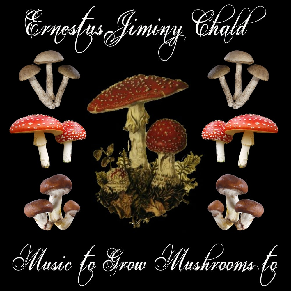 Image of Music to Grow Mushrooms to (CD)