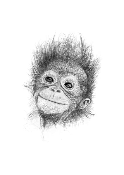 Image of Baby Orangutan