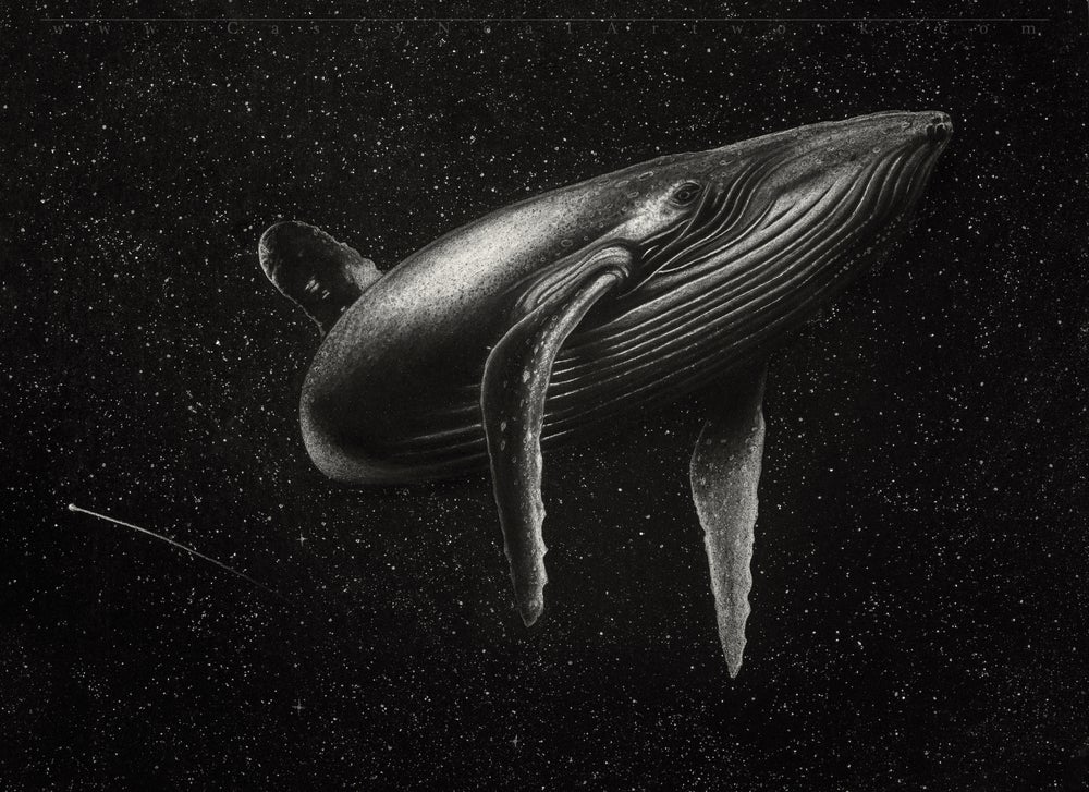 Image of Whale In Space