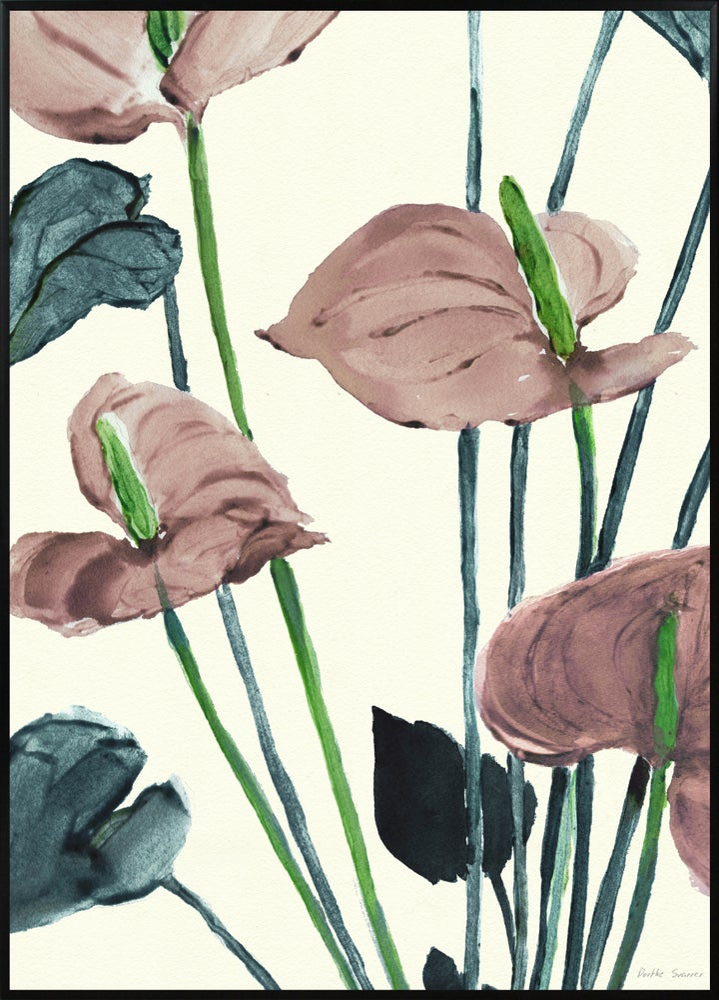 Image of Anthurium Pink A3 No.3002