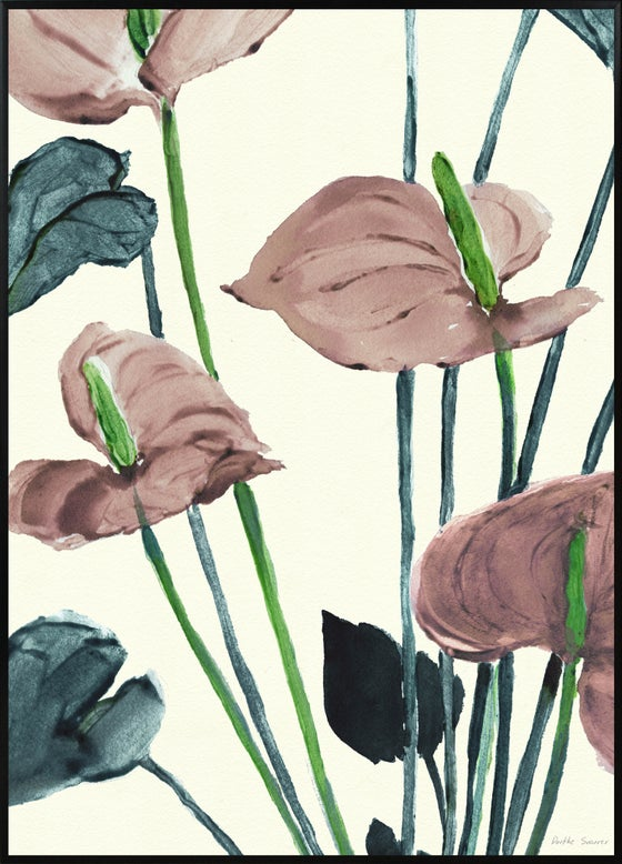 Image of Anthurium Pink A3 No.3002