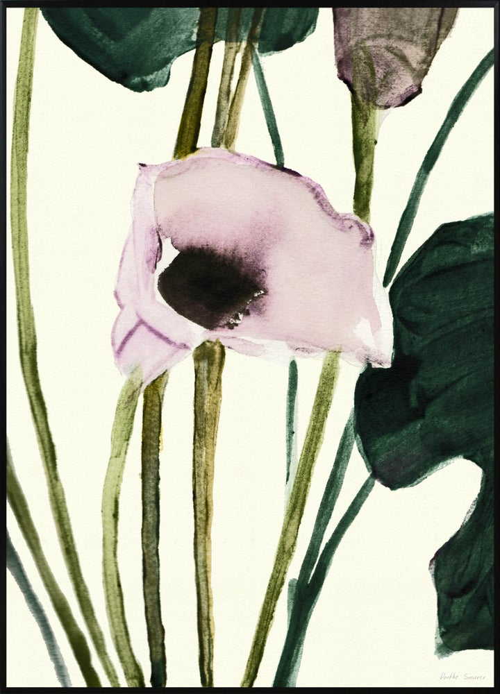 Image of Calla - Various sizes - prices from