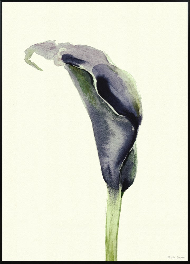 Image of Calla Nero 2 50x70cm No.5007