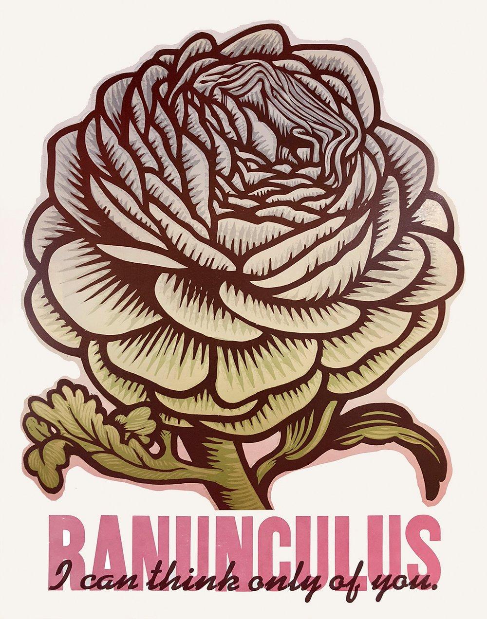 "Image of ""Ranunculus"""