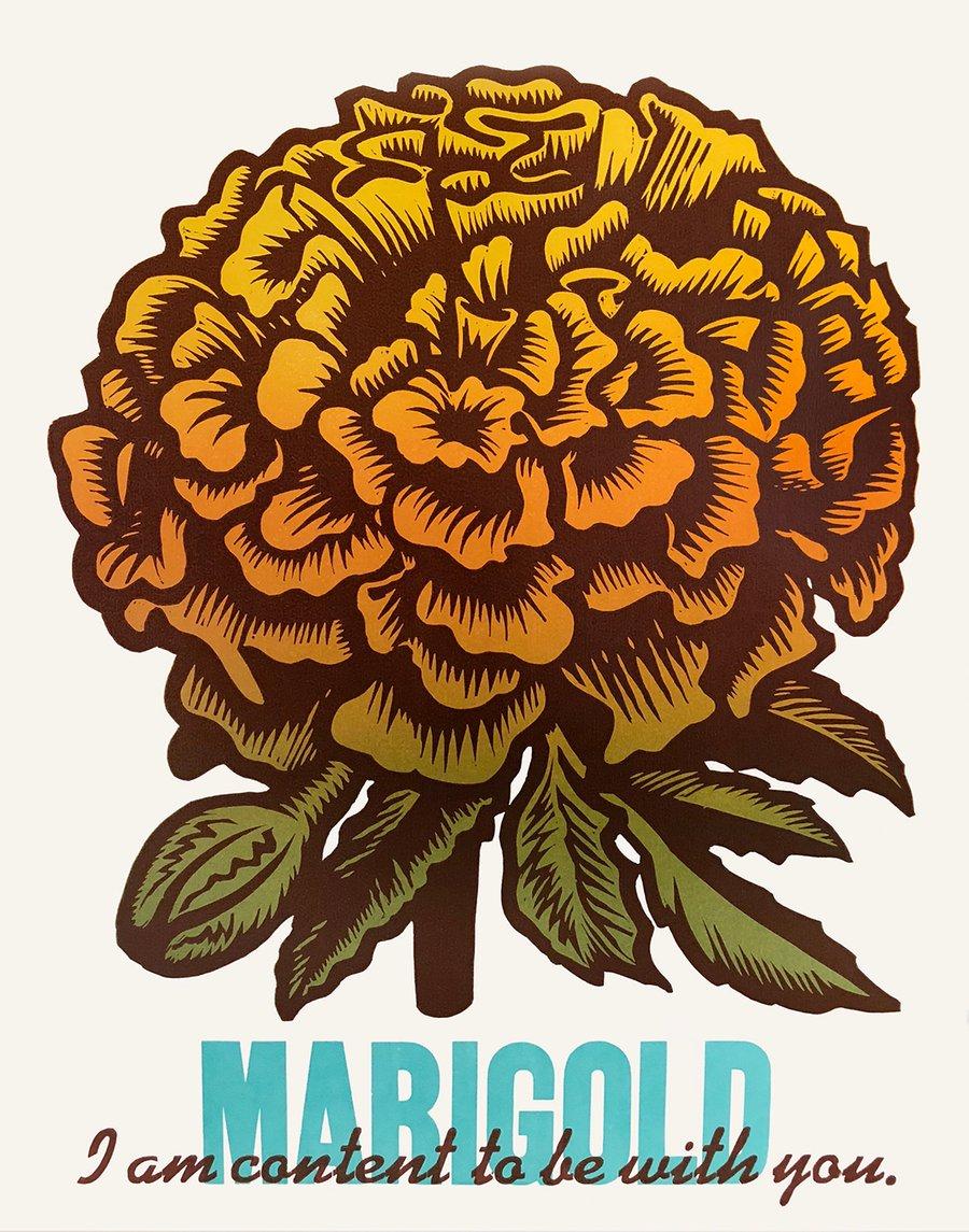 "Image of ""Marigold"""