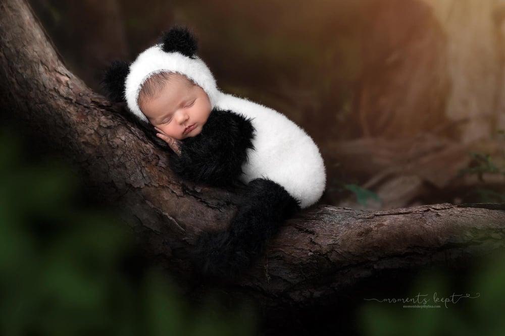 Image of Furriest Little Panda Set