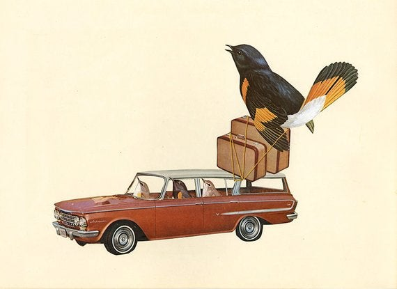 Image of Rambling redstarts with a tail wind. Original collage by Vivienne Strauss.