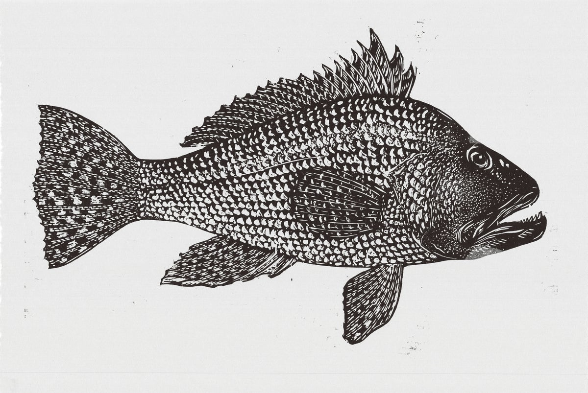 Image of Black and White Striped Bass Woodblock Print