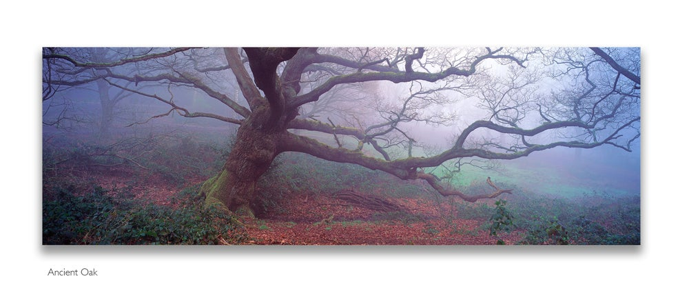 Image of Fine Art Panoramic Photography