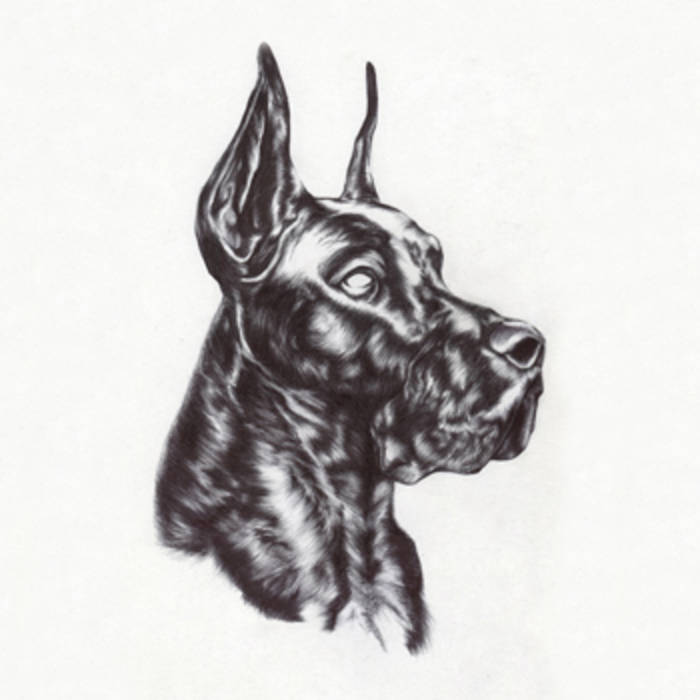 Image of Great Dane - Alpha Dog