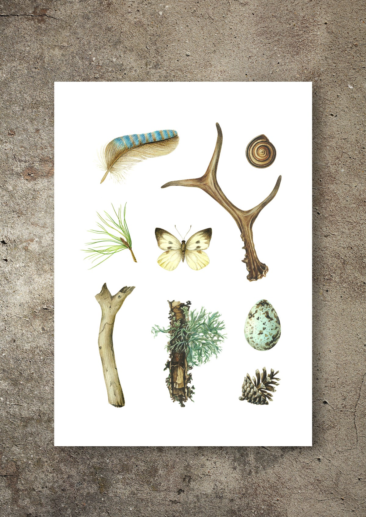 """Wild Scandinavia: Spring"". Fine art print of a botanical composition in watercolor."