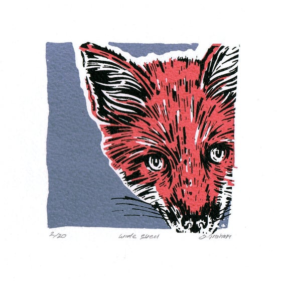 Image of Mini fox, Wide eyed