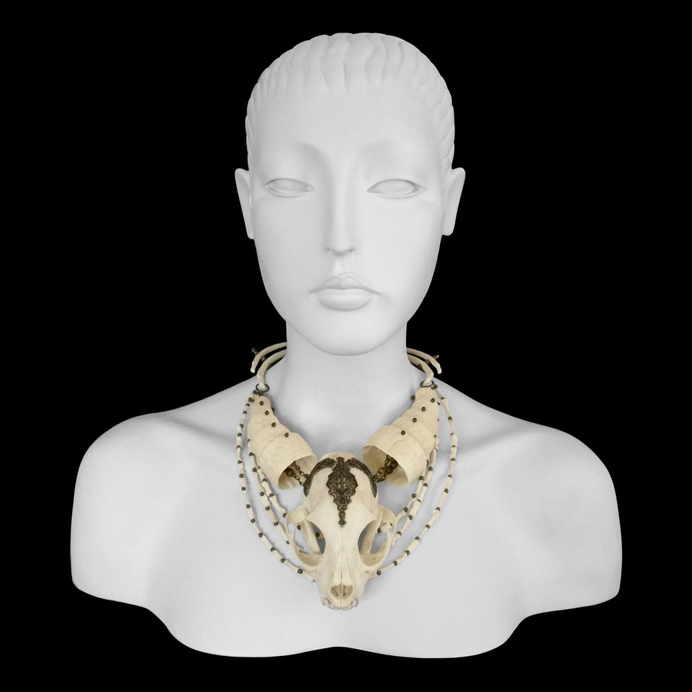 "Image of ""Shuri"" Bobcat & Armadillo Bone Necklace"