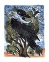 Chihuahua Ravens: 11 x 14 inch Archival Inkjet Print (Giclée)