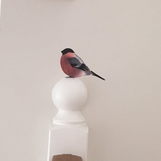 Image of Bully Bullfinch ~ Wall decal