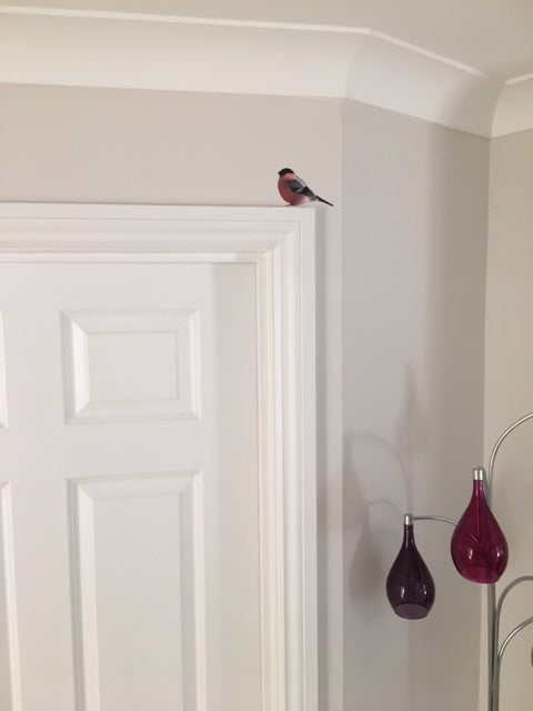 Image of Bully Bullfinch ~ Wall sticker decal