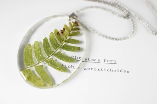 Image of Christmas Fern (Polystichum acrostichoides) - Large Oval #1