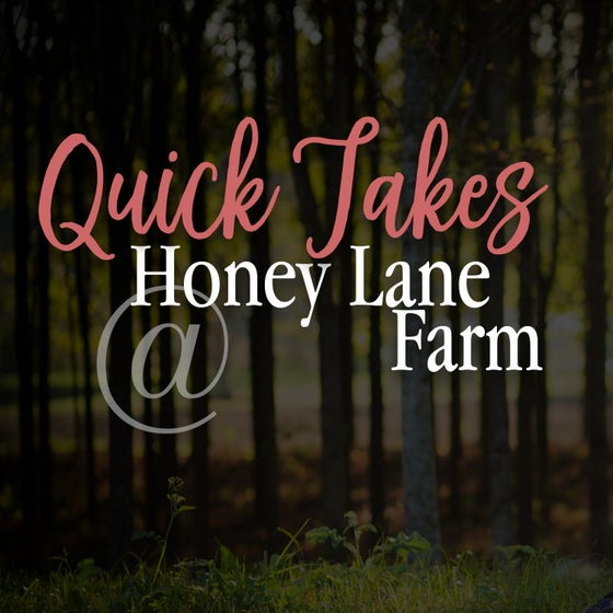 Image of Quick Takes @ HoneyLane Farm