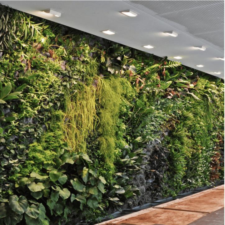 Image of Sponsor a Plant