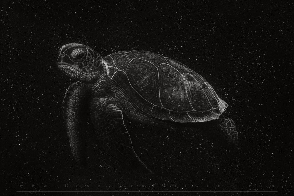 Image of Turtle In Space