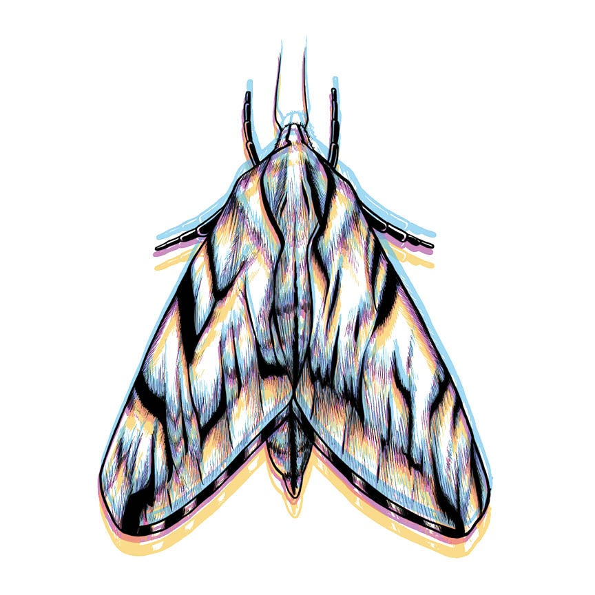 Image of CMYK Moth