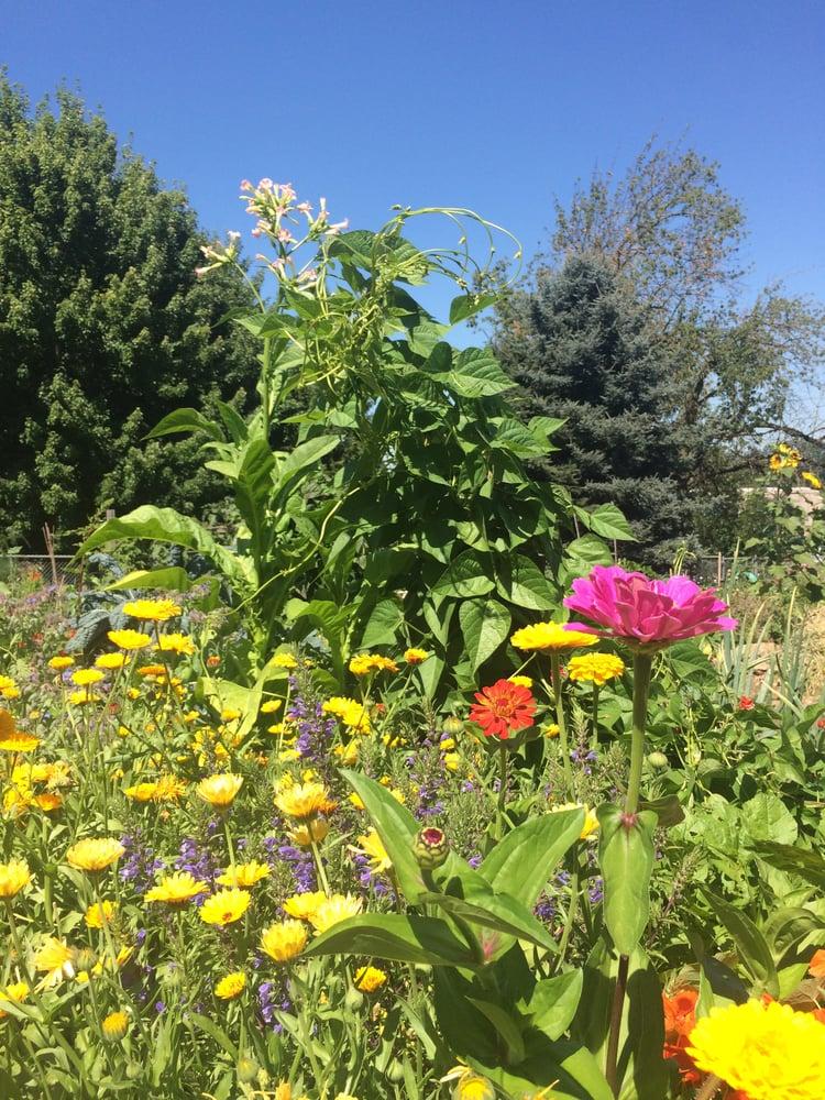 Image of 1 hr. Garden Consult