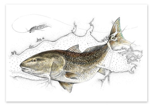Image of Redfish and  East Choctawhatchee Bay, Florida