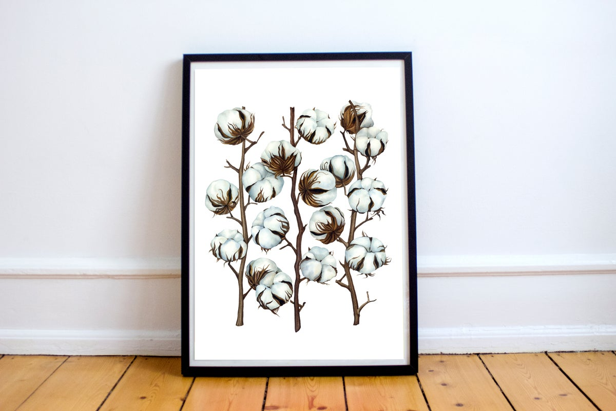 """""""Soft Cotton"""".  Fine art print of a botanical watercolor painting."""