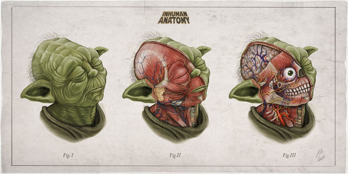 Image of YODA - head anatomy  (limited ed. of 50 Giclèe  wide print on fine art canvas)