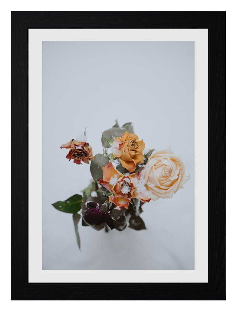 Image of 'WINTER ROSE' PRINT