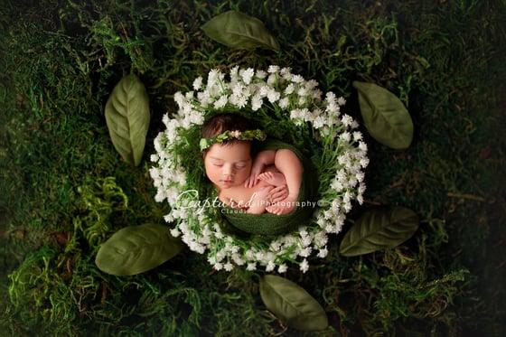 Image of Babies Breath - Garden