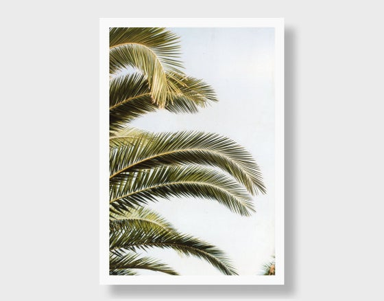 Image of Portugal Palm