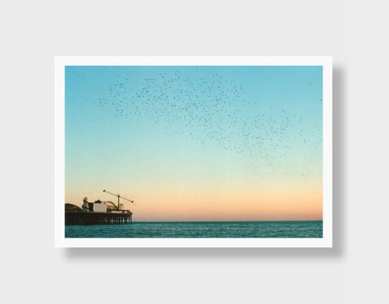 Image of Brighton Starlings
