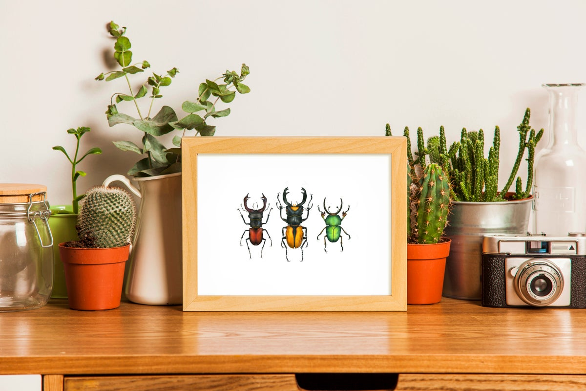 """Lucanidae Beetles"". Fine art print of a natural history watercolor illustration."