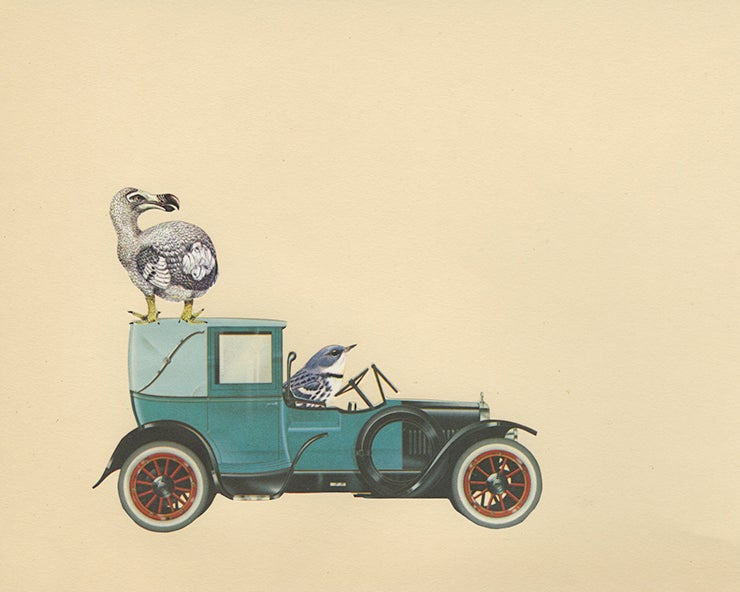 Image of Alas, the dodo has gone the way of the Brewster. Original collage by Vivienne Strauss.
