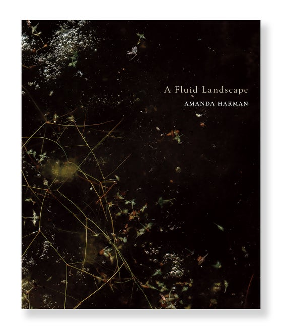 Image of Amanda Harman - A Fluid landscape