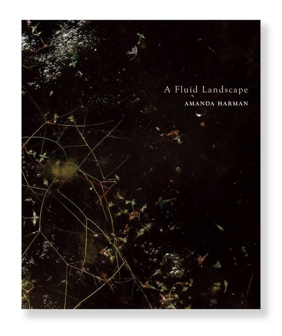 Image of Amanda Harman - A Fluid landscape