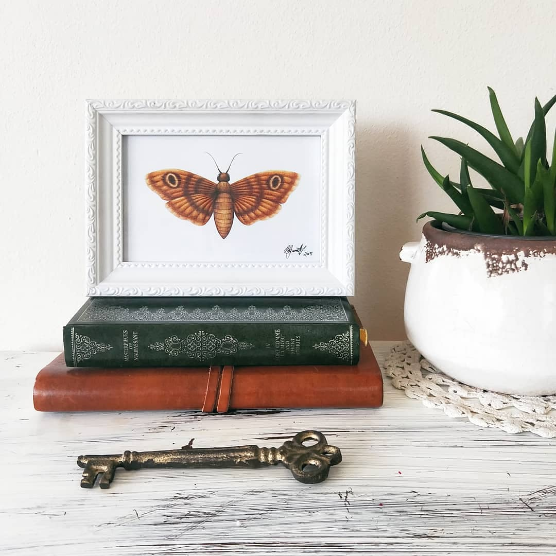Image of Moth - ART PRINT