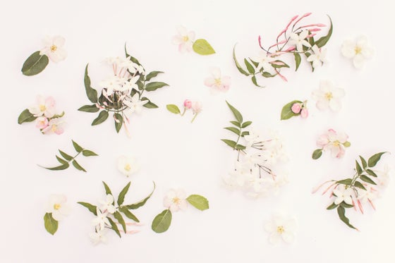 Image of September - Jasmine & Japanese Quince