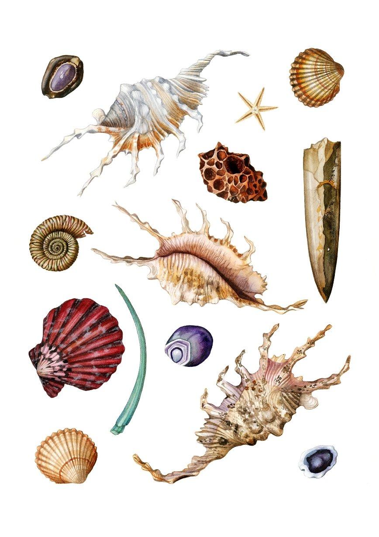 """Ocean Dance"". Fine art print of a seashell composition in watercolor."