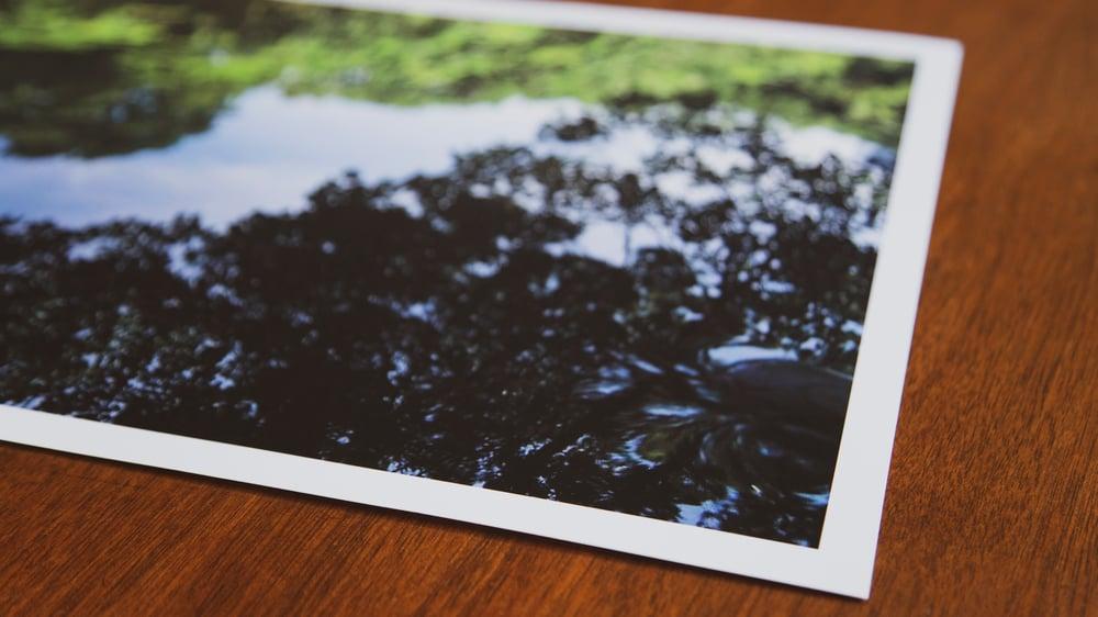 """SANSHIRO POND"" 12X17 Print (Signed single edition)"