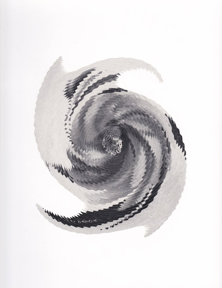 Image of Camellia Spin