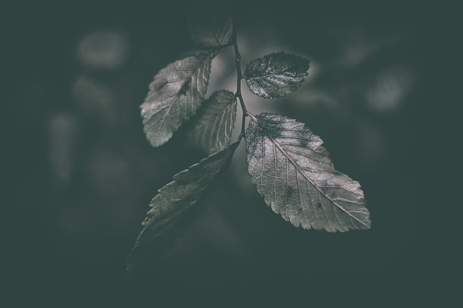 Image of Wet Leaves