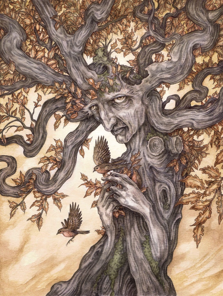 Image of 'Ask The Oak' by Adam Oehlers